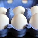 egg-3506222_640