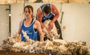 Shearing and Woolhandling Photo Credit Chris Wright 2017